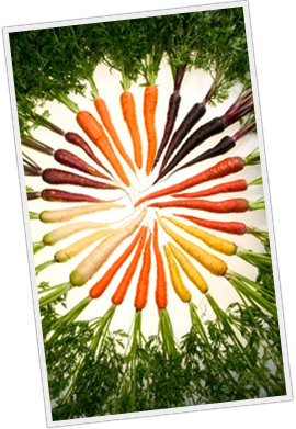 wide variety of carrots